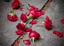 Я раскидаю цветы
