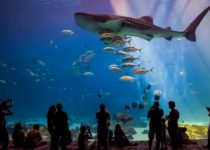 Крупнейшие аквариумы России